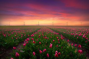 Tulpen und Windmolens von Albert Dros
