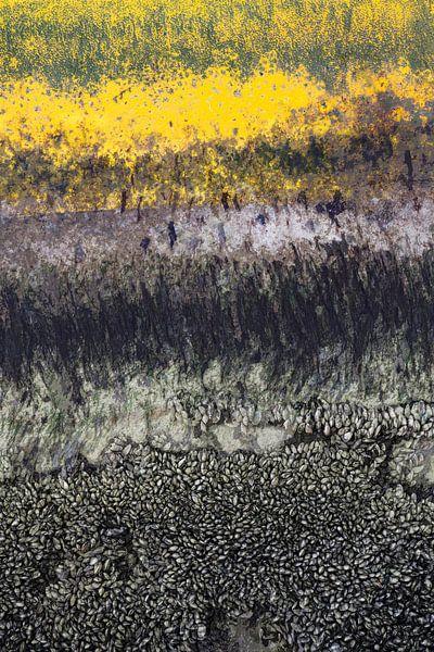 Abstract met mosselen van Hanneke Luit