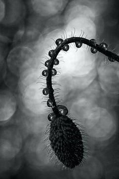 drops in shadow van Inge Groters