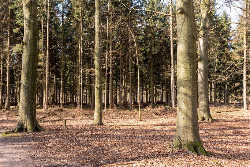 Bomen in de zon in Lage Vuursche van Jaap Mulder
