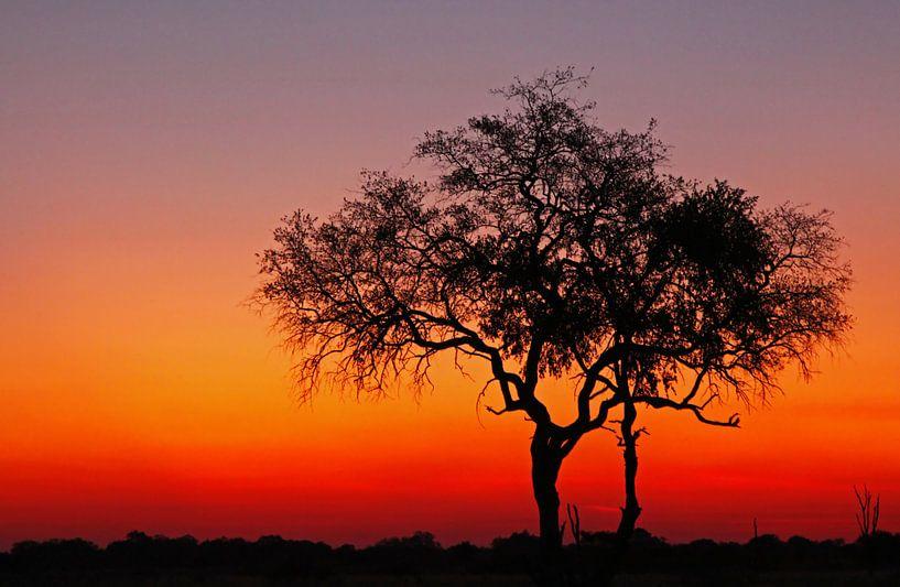 Evening in Africa van W. Woyke
