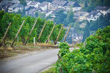Romantisch zicht over de wijnranken bij de Moezel in Duitsland, Bernkastel van Patrick Verhoef