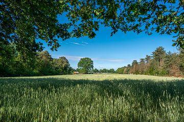 Weizenfeld von Henri Boer Fotografie