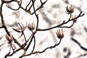 Klaar voor het voorjaar! van Nico van Haastrecht