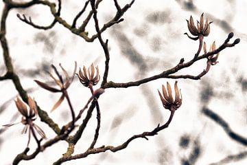 Klaar voor het voorjaar! von Nico van Haastrecht