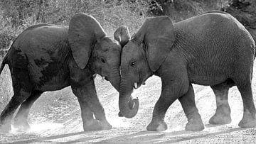 Spelende olifantjes. van