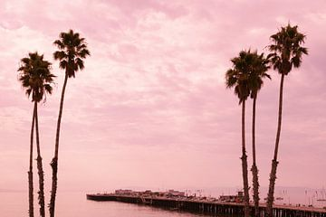 Palmbomen bij zonsondergang Santa Cruz pier, Californië, USA van