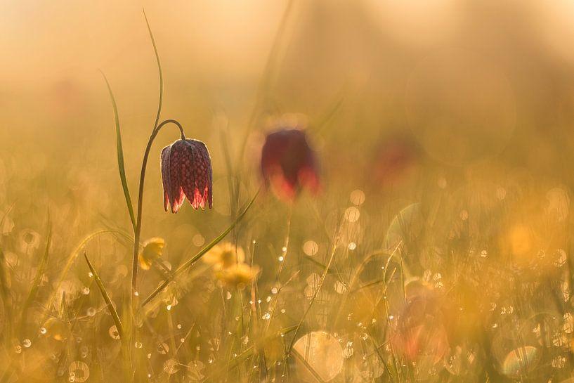 gouden bloem van Ina Hendriks-Schaafsma