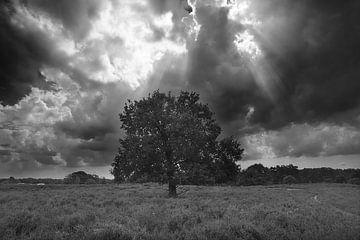einsamer Baum und nahendes Gewitter von Remco Schoonderwoert