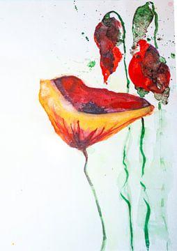 3 Mohnblumen von Klaus Heidecker