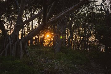 zonsondergang in het bos van Ennio Brehm