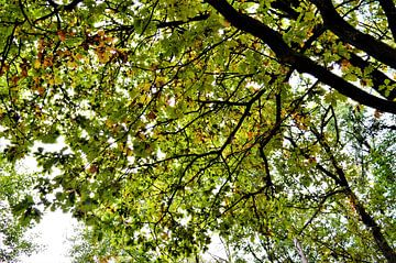 Natuur op zijn mooist... von DoDiLa Foto's