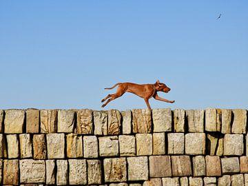 Flying Dog von Noortje van Zuidam