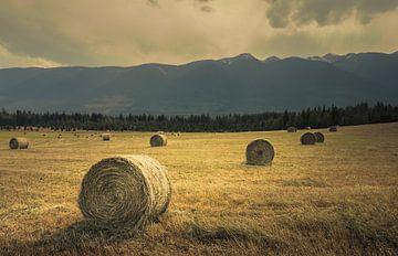 Goldene Felder von Joris Pannemans - Loris Photography