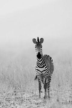 Zebra in Schwarz & Weiß von YvePhotography