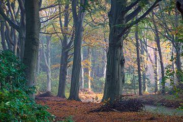 Bos in de herfst von Michel van Kooten
