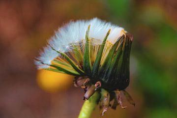 Die Natur kriecht aus ihrem Schneckenhaus heraus von Scarlett van Kakerken