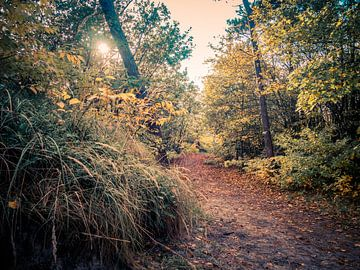 Chemin forestier dans la forêt... von Martijn Tilroe