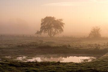 Morgennebel von Ellen Gerrits