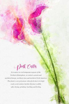 roze calla van Theodor Decker