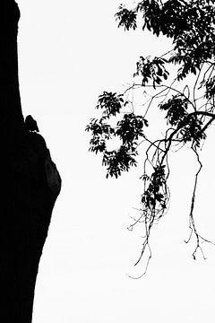 Uil in silhouet van Carol Thoelen