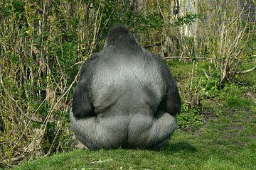 Gorilla in groen van Cornelis van Deursen