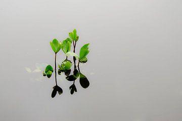 Waterplanten in poel van Eddie Smit
