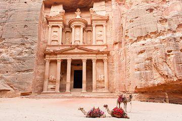 Kamele in Petra, Jordanien von Laura Vink