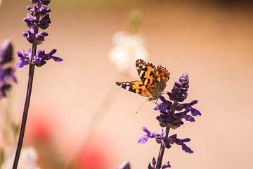 Wunderschöner Schmetterling im Park von Iris Beukelman