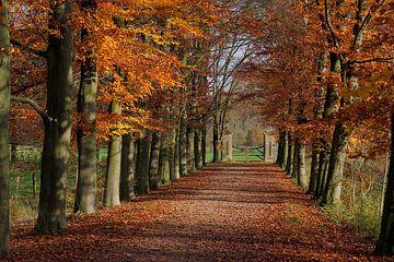 Beukenlaan Oud-Valkenburg in de herfst van Ton Reijnaerdts