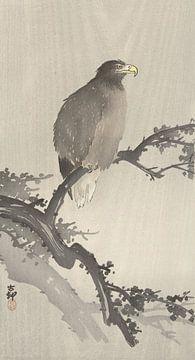Weißkopfseeadler auf einem Zweig des Ohara Koson