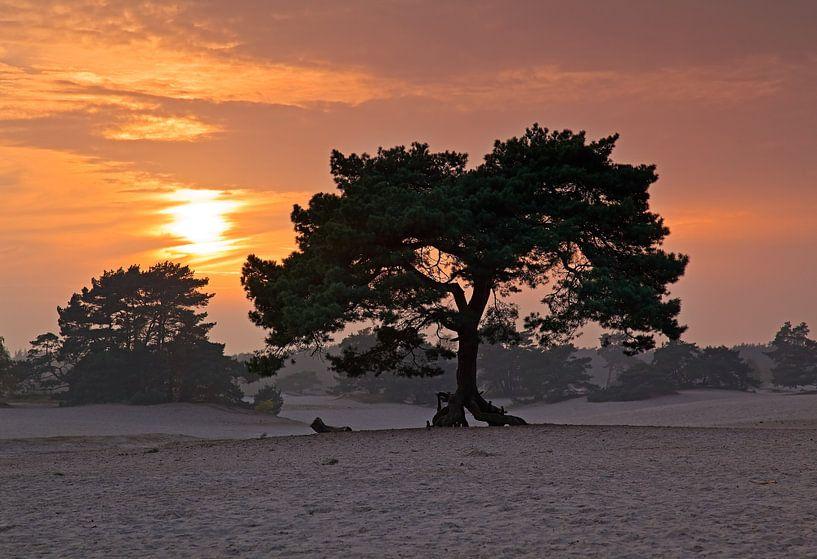 Zonsondergang zandverstuivings gebied Soesterduinen van Anton de Zeeuw
