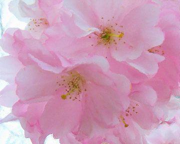 Pink fragility sur Frans Jonker