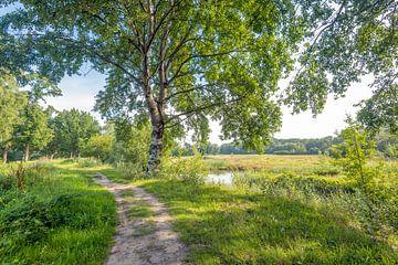 Paysage idyllique à la lisière d'une forêt néerlandaise