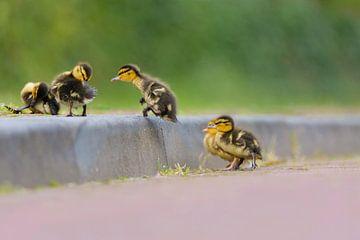 jumping duckling von