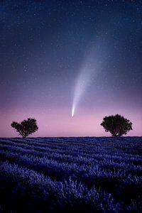 Komeet Neowise c/2020 F3 in het lavendelveld in de Provence, Frankrijk.