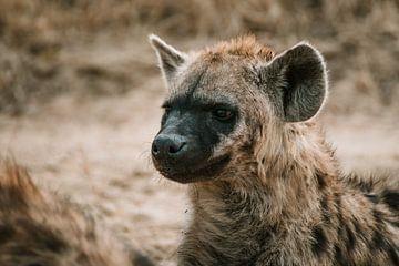 Mutter Hyäne von Pepijn van der Putten