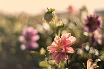 Pastelkleurige bloemen van