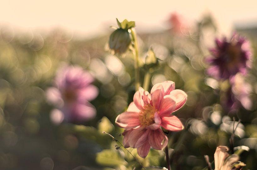 Pastelkleurige bloemen van Tammo Strijker