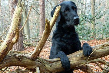 Zwarte hond kijkt schattig