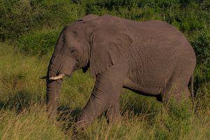 Gerissenes Südafrika