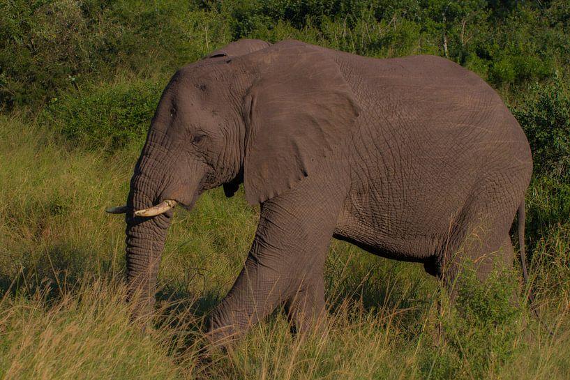 Gerissenes Südafrika von Wesley Klijnstra