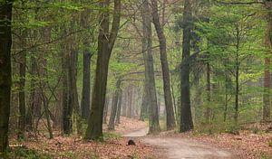 Voorjaars bos