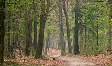 Voorjaars bos met beukenbomen van Corinne Welp