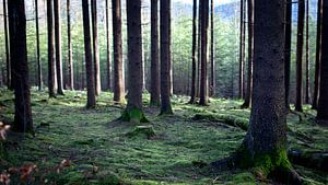 Tussen de bomen in het bos