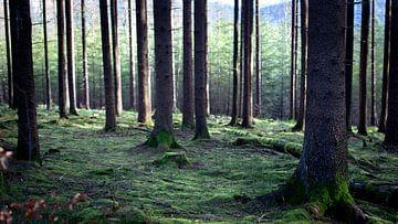 Tussen de bomen in het bos van Fleur Halkema