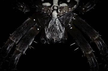 kruisspin macro van Thomas Spaans