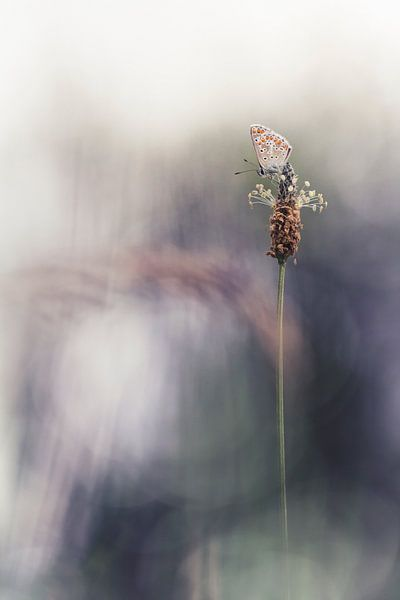Dreaming that I am a butterfly van Bob Daalder