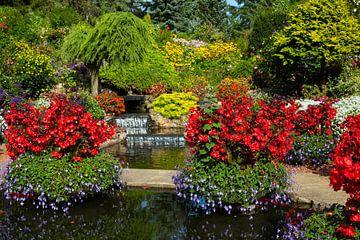 schöner Garten mit roten Begonien und Grünpflanzen