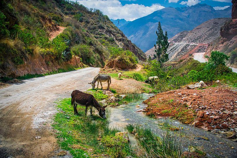 Grazend vee in de berm van een bergweg in de Heilige Vallei, Peru van Rietje Bulthuis